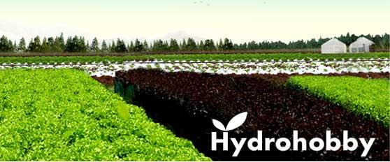 ธุรกิจ SMEs ปลูกผักไร้ดิน HydroHobby พืชไร้ดิน